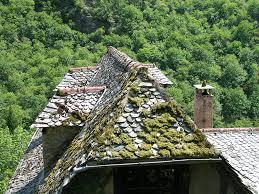 pourquoi il y a-t-il de la mousse sur la toiture