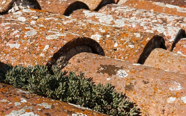 comment enlever du lichen sur une toiture